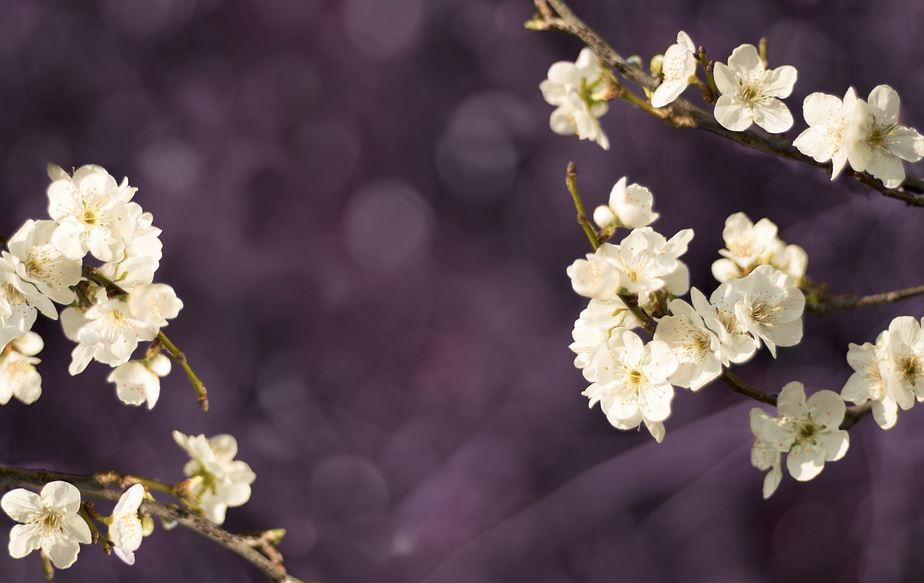 cremation service in Chaska, MN